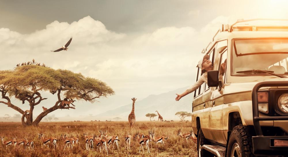 Nella savana o nella giungla: viaggiare più sicuri con il cdi
