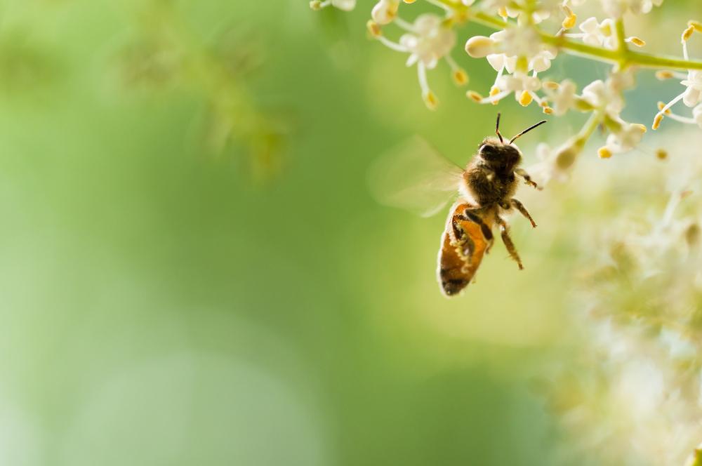 Punture di api, vespe e calabroni